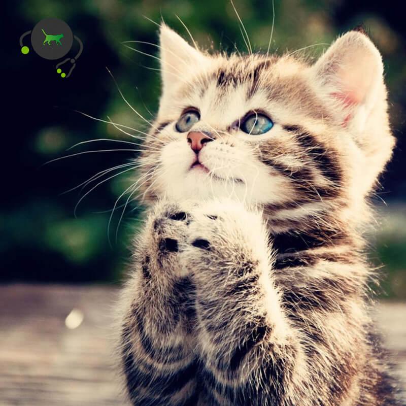 Cat Parentage - Genetic profile - Genimal Biotechnologies
