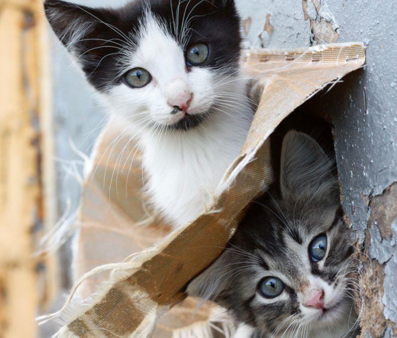 10 kaķi, kas pelna naudu