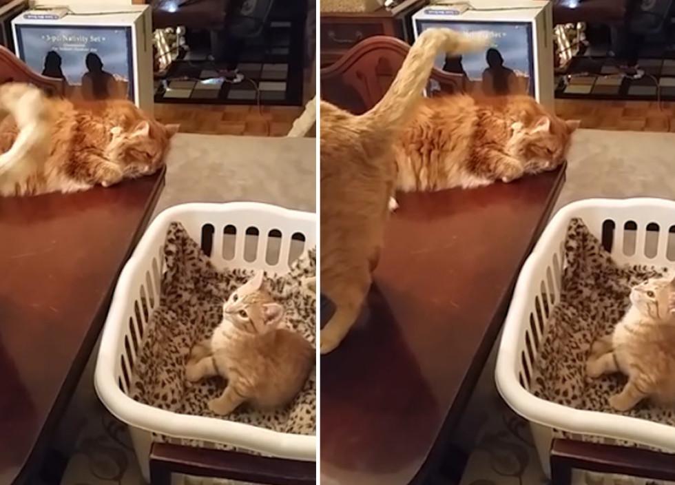 kaķis pelna naudu video