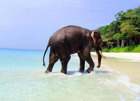 ziloņu izsekošana internetā, kā nopelnīt naudu)