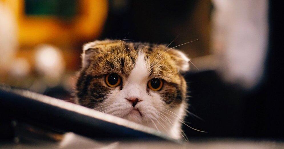 kaķu opciju stratēģija darbs monex trading darbinieku pārskatos