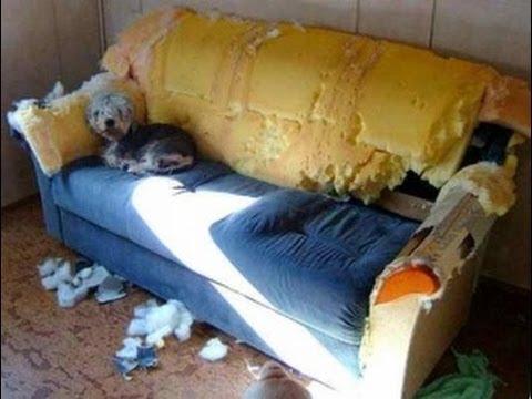 kā nopelnīt naudu uz dīvāna)