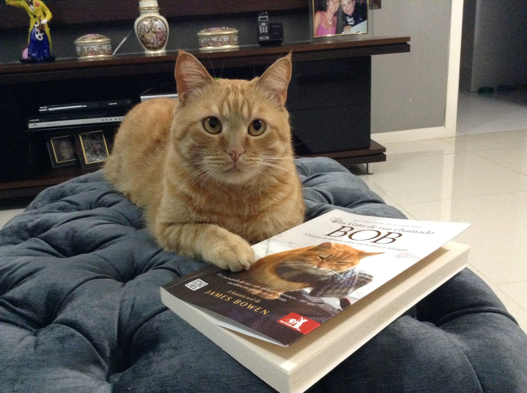 Gigantisku izmēru kaķis! VIDEO - azboulings.lv
