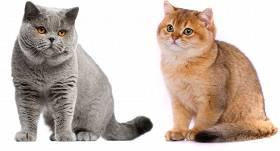 kaķu opciju stratēģija līdzekļu izņemšana ar iq binārām opcijām